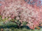 О.В. ВОЛОКИТИНА. Розовая яблоня. 2007