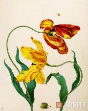 Maria Sibylla MERIAN. A Picture of Tulips and a Slug on Gooseberry Sawfly. 1705
