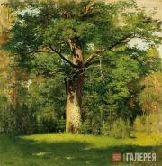 Levitan Isaaс. Oak Tree. 1880
