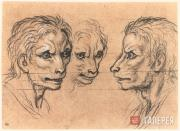 Charles LE BRUN. Three Male Heads Resembling the Wolf
