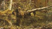 Forest (Shmetsk, near Narva). 1888
