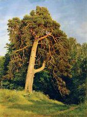 Pine-tree. Mericule. 1894