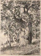 Old Oak. 1897