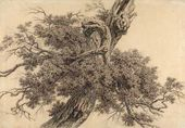 Stepan GALAKTIONOV. Tree. Early 1800s