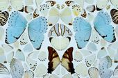 Sympathy in White Major – Absolution II. 2006. Detail. © Damien Hirst and Science Ltd. All rights reserved, DACS 2012