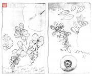 Якунчикова Мария. Лист из дневниковых записей художницы с разработкой мотива «Бр