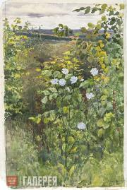 Polenova Yelena. Cichorium. 1894
