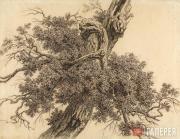 С.Ф.ГАЛАКТИОНОВ. Дерево. Начало 1800-х