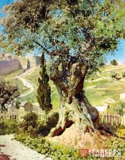 Polenov Vasily. Olive Tree in Gethsemane. 1882