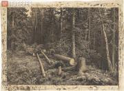 Shishkin Ivan. Felled Tree in the Forest. 1870