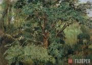 Ахтырский дуб. Нач. 1880-х