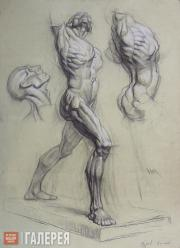 Unknown artist. Ecorché  drawing of a figure, torso and head – side view