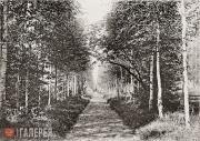 М.В. Якунчикова-Вебер (?) Березовая аллея. 1897–1899