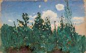 Wild Grass. 1875