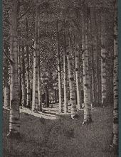"""A Birch Grove"" (1881, present whereabouts unknown)"