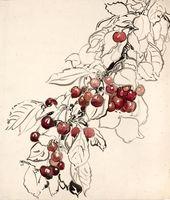Cherry Trees. 1897