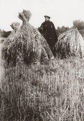 Netta Peacock and Haystacks [1897–1898]