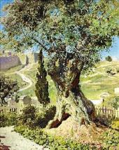 Олива в Гефсиманском саду. 1882