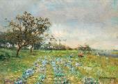 В огороде. Гряды капусты. Начало 1900-х