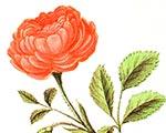 Приглашаем на День Цветов в саду у Пушкина | Государственный музей А.С. Пушкина