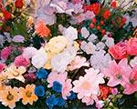 Открытие выставки Саши Ковалевой «Pushing up the wild daisies*»   ММОМА, Гоголевский 10/1